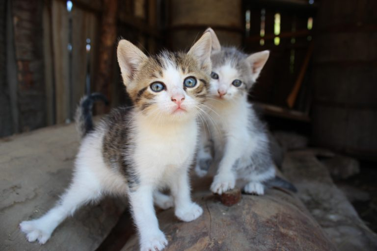 Two little cats