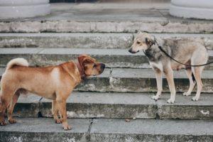 Two dogs talking in street